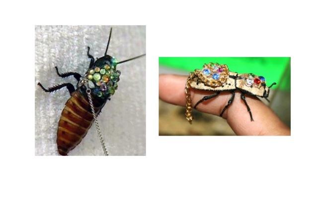 Live Bug Jewerly Interesting Jewelry Facts